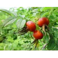 Buy cheap Rose Hips Extract 100% natural Vitamin C, Vitamin E, Antioxidation, Skin repair function and Skin whitening from wholesalers