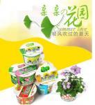 Buy cheap Free Shipping DIY grass planting Mini Plants Zinnia Elegans Small Flower Bonsai from wholesalers