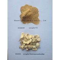 Buy cheap Hot selling Astragalus extract, Polysaccharide 10-70% UV;10:1(pure powder)TLC from wholesalers