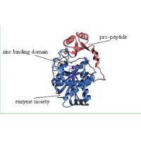 China Recombinant Carboxypeptidase B is an  excision enzymes  with Animal Components Free on sale