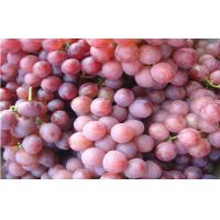 Buy cheap Fresh Victoria Red Globe Grapes Thin Skin , Sweet Flesh For Children / Kids from wholesalers