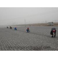 Buy cheap Geogrid for Asphalt Pavement Reinforcement from wholesalers