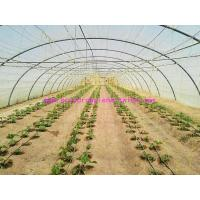 Buy cheap 1.67g/m Industrial Split Film Poly Baler Twine Raw White Color For Tomato Tree from wholesalers