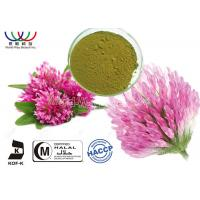 Buy cheap Red Clover Organic Herbal Extracts , Red Clover Leaf Extract Modulate Lipid Metabolism product