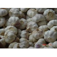 Buy cheap 2016 China New Fresh Garlic Normal or Pure White Exporting to Chittakong, Bangladesh from Ji'ning, China from wholesalers