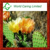 Buy cheap Weight Loss Ingredient Hoodia Gordonii extract 20:1 Cactus Extract from wholesalers