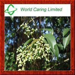 Buy cheap Natural Herbal Viagra Ligustrum Lucidum Ait Extract for men's sexual enhancement product
