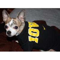 Buy cheap 2012 new arrival designer dog clothes striped T-shirt jeans from wholesalers