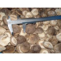 Buy cheap IQF Shiitake Mushroom Whole from wholesalers