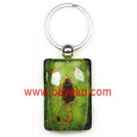 Buy cheap real scorpion in resin key chains,scorpion key chains,scorpion keyring,bug keyring from wholesalers