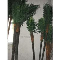 Buy cheap Little coconut tree from wholesalers