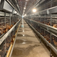 Buy cheap 256 Birds Battery Cage System from wholesalers