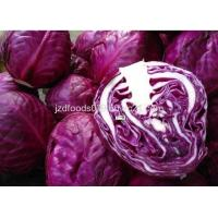 China Fresh Purple Cabbage on sale