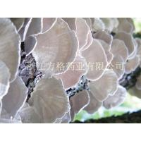 Buy cheap Coriolus versicolor extract 20%-60%,GMP/HACCPcertificate from wholesalers