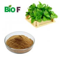 Buy cheap Medicinal Powdered Herbal Extracts Pure Peppermint Extract Powder from wholesalers