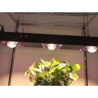 Buy cheap Dimmable COB LED Grow light 300W / Gardening timmer system CREE CXB 3590COB from wholesalers