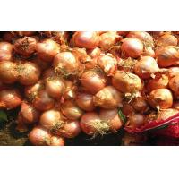 Buy cheap Authenticated Non-Peeled Red Asian Shallots Fresh Contains Flavonoids from wholesalers