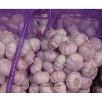Buy cheap 4.5-5.0-5.5cm normal white garlic from wholesalers
