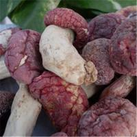 Buy cheap Wholesale authentic wild red mushrooms from wholesalers