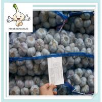 Buy cheap bulk fresh garlic different size from 4.5-6.5cm Pure White Garlic from wholesalers