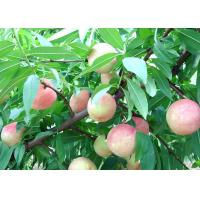 Buy cheap 100% pure sweet peach powder China wholesale/ factory price juicy peach powder flavour from wholesalers