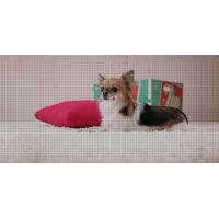 Buy cheap Pet Grooming Table for dog from wholesalers