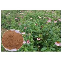 Buy cheap Chicory Acid Pure Herbal Supplements , Whole Herb Echinacea Purpurea Extract from wholesalers