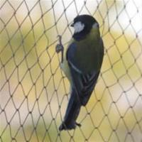 Buy cheap Anti-bird Net,15-30mm opening,1m-25m width,black,white and green colour from wholesalers