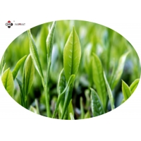Buy cheap 40% Polyphenols Green Tea Leaf Extract from wholesalers