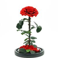 Buy cheap Fashion Dried Long Stem Rose Flower In Glass With Beautiful Appearance from wholesalers