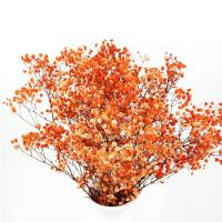 Buy cheap Colorful Dried Baby'S Breath Bouquet , Preserved Baby'S Breath For Gift from wholesalers