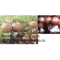 Buy cheap China Agaricus Blazei Mushroom Extract for sale from wholesalers