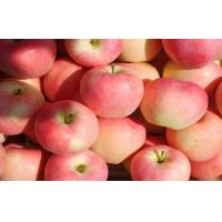 Buy cheap bright red skin streaked with yellow Large Fuji Apple sweet tart flesh medium-crisp from wholesalers