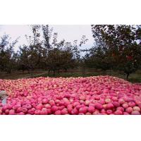 Buy cheap Health Benifits Delicious Red Fuji Apple No Stain Long With Shelf Life from wholesalers