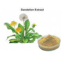 Buy cheap 4% Flavonoids Organic Dandelion Root Extract , Dandelion Leaf Extract Anti - Inflammatory And Antiviral from wholesalers