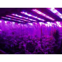 Buy cheap AC85-265v Hydroponic Plant Grow Light 95 Watt High Power Led Grow Lights product