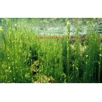 Buy cheap Healthy Organic Seaweed Powder For Food Industry CAS 977001 75 4 ISO Certification from wholesalers