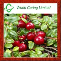 Buy cheap High quality Bearberry Leaf Extract Powder Ursolicacid 90% from wholesalers
