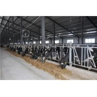 Poultry Farm Building Structure