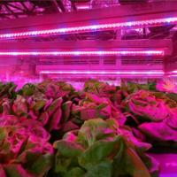 Buy cheap SMD 2835  Led Indoor Garden Lights For Flower / Vegetable , 6-8m Sensor Distance product