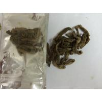 Buy cheap Arenicola marina,lugworm, marine worm, fishing worm from wholesalers