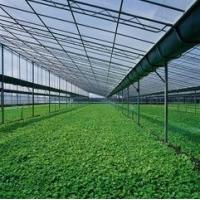 Buy cheap Twin - wall Hollow Greenhouse Polycarbonate Sheets , greenhouse wall panels from wholesalers