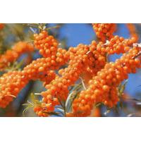 Buy cheap Seabuckthorn Juice Powder from wholesalers