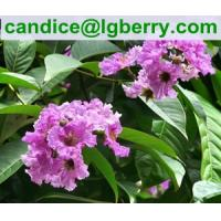 Buy cheap 100% Natural Banaba Leaf Extract Corosolic acid for nutritional supplement from wholesalers