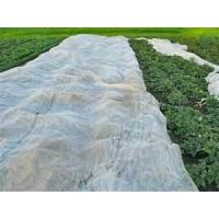 Buy cheap Water-resistant good tensile strength agricultural fabric, plant frost protection covers from wholesalers