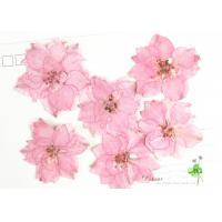 Eternal Floral Dried Pressed Flowers Larkspur Diameter 3CM For Christmas Decorations