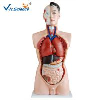 Buy cheap Full Size Human Torso Model  85cm Man Torso 19 Parts Oem Service from wholesalers