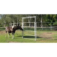 Buy cheap Horse Round Yard 40x40mm 6 Oval Rails. Locking Pins. ,  Victoria , Cattle from wholesalers