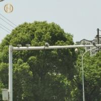 Buy cheap Straight Type Traffic Signal Post 3M 6M High Durability For Cross Road from wholesalers