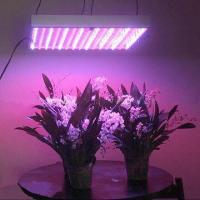 Buy cheap 600W LED Grow Light with 60/50Hz Working Frequency from wholesalers